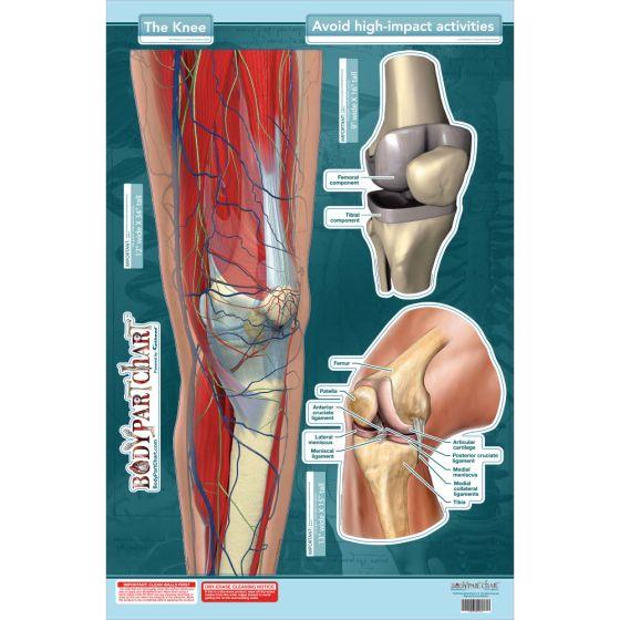 "BodyPartChart™ The Knee 24"" x 33.5"""