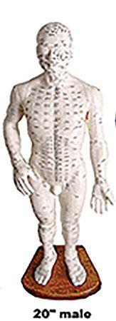 Male Body Model 20