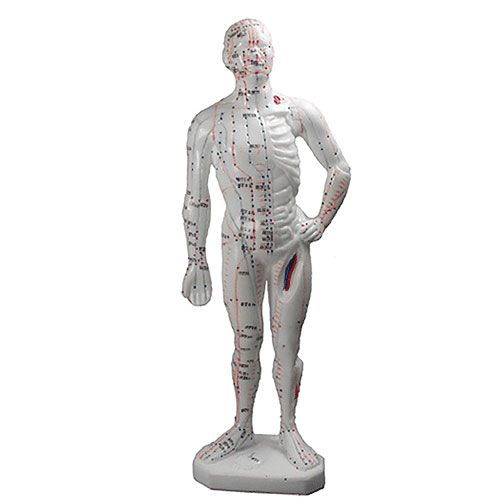 Human Body Model 10