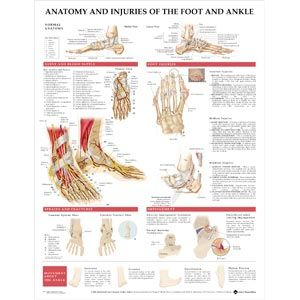 Foot And Ankle Chart, 20