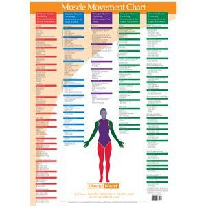 Kent Trigger Point Charts - Muscle Movements