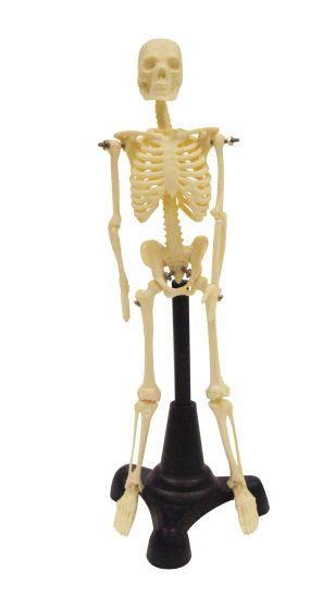 Petite Pete Skeleton