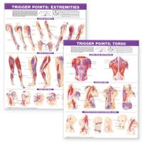 Trigger Point Chart Set: Torso & Extremities Laminated Charts