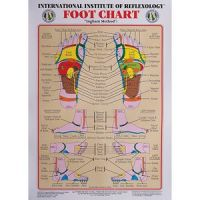 "International Institute Of Reflexology Foot Chart - 23"" X 30"""